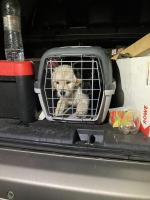 hundetransport 00